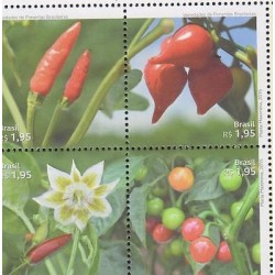 E) 2015 BRAZIL, FLOWERS AND PLANTS, VARIETIES OF BRAZILIAN PEPPERS, FRUIT