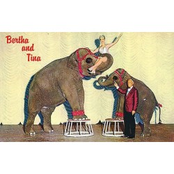 G)1962 USA, ELEPHANTS, BERTHA AND TINA, THE NUGGETS OWN TALENTED PACHYDERMS, POS