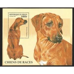 V) 1997 BENIN, DOGS, RHODESIAN RIDGEBACK, SOUVENIR SHEET, MNH